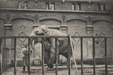 De Gentse dierentuin : een menselijk verhaal met beestige kantjes