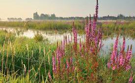 Op zoek naar eetbare en medicinale planten in de Gentbrugse Meersen