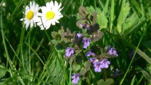 Medicinale planten – Uitgesteld naar 2022
