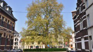 Gent, een natuurlijke schoonheid – Een verhaal over water, groen en monumenten